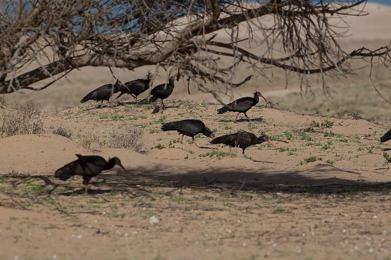 Birds in Sous-Massa National Park
