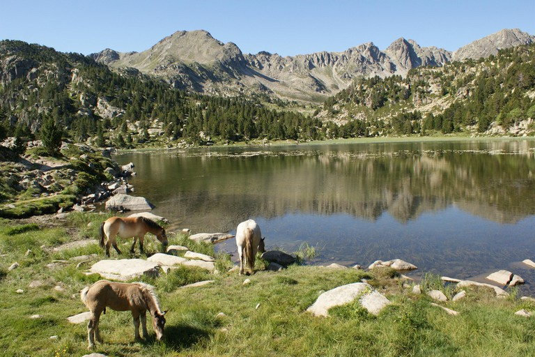 wild horses in Encamp, Andorra