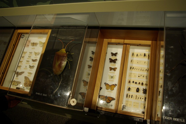 Otago Museum Nature Gallery