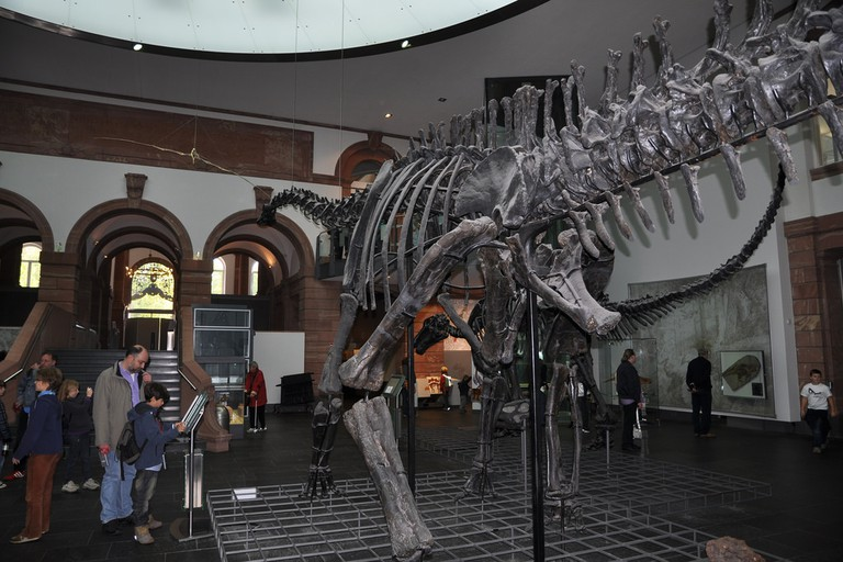 Senckenburg Natural History Museum