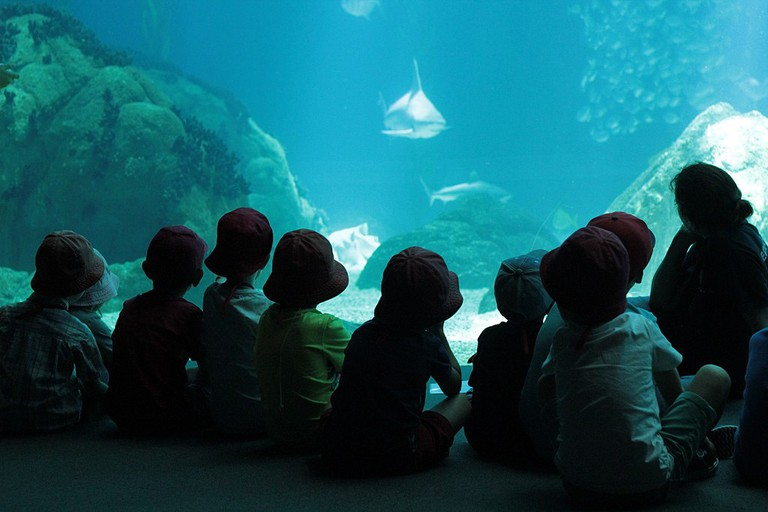 The Oceanarium is a great place to bring the kids