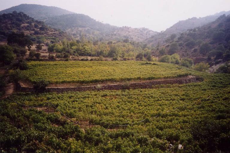 Methymnaeos Winery, Lesvos