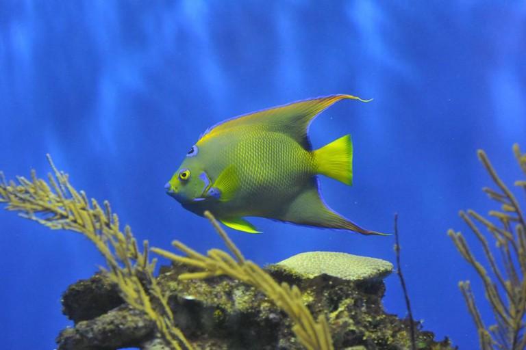 Birch Aquarium at Scripps