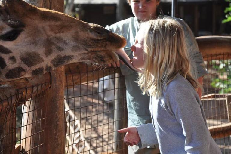 Langata Giraffe Centre