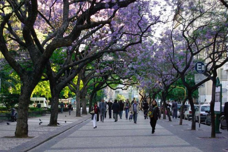 Rush hour under the Jacarandá