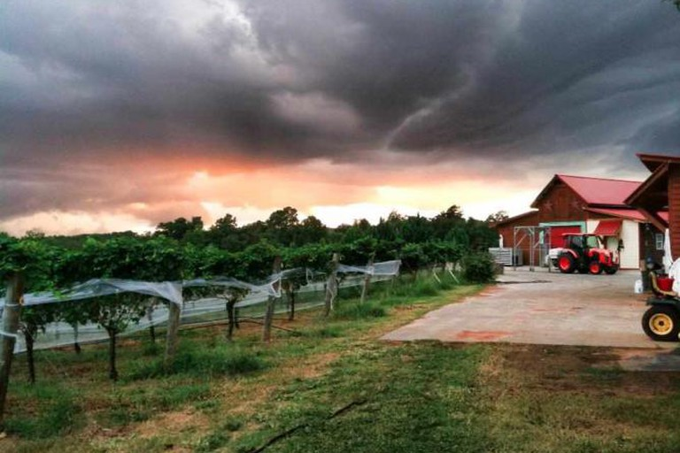 Harvest season at Overmountain Vineyards