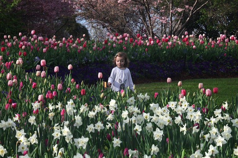 Dallas Blooms is a yearly festival of blooms at the Dallas Arboretum and Botanical Gardens