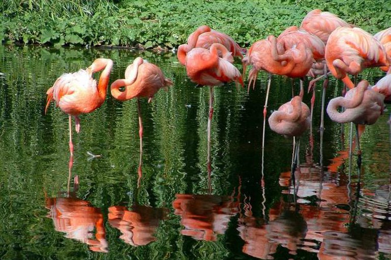 Flamingos, Heidelberg Zoo