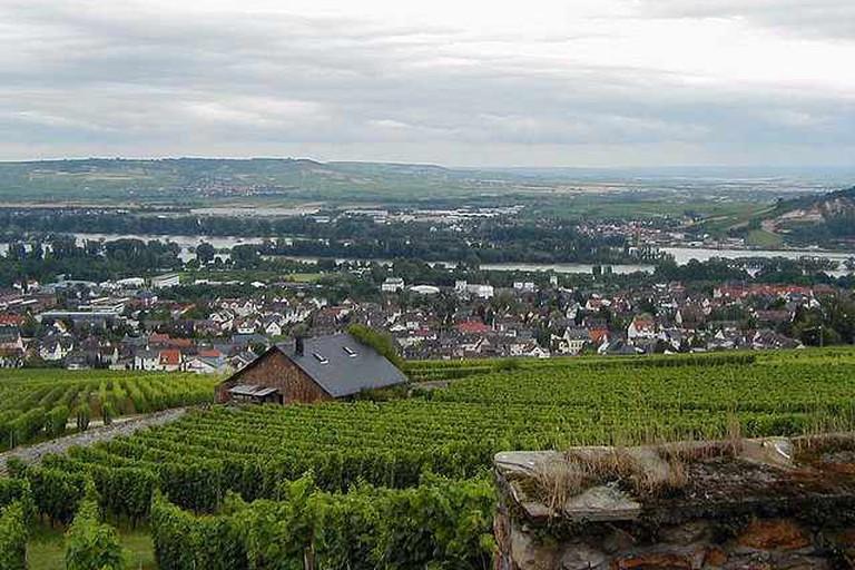 Rüdesheim's vineyards