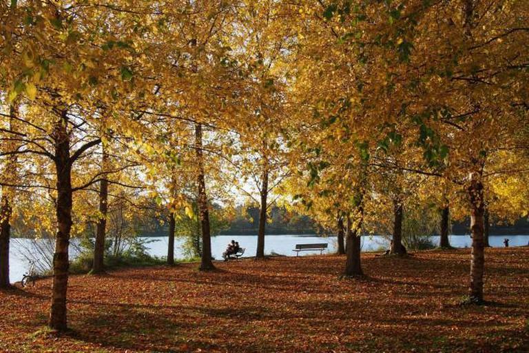 Autumn at Green Lake Park