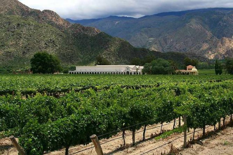 Vineyard in Salta province