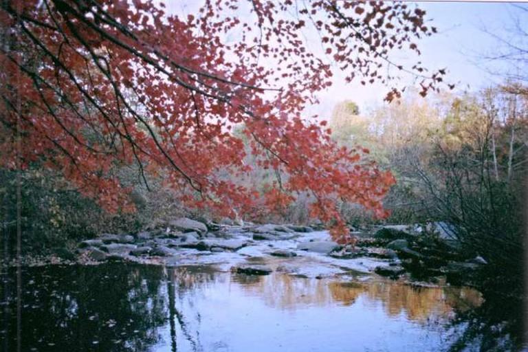 Lake in Beardsley Park, Bridgeport CT