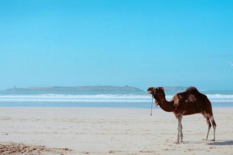 Beach at Essaouira