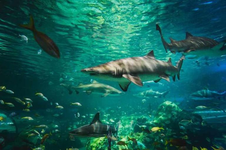 Shark Tank at Ripley's Aquarium of Canada