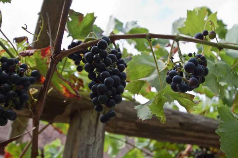Wine arbour