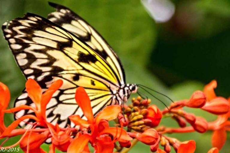 Bornholm Butterfly Park, Nexo