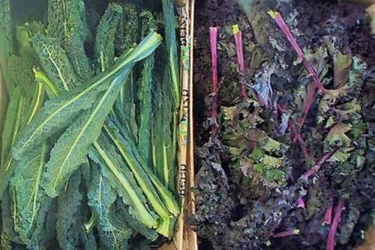 La Récolte, Le Chou Kale est sur l'étalage!