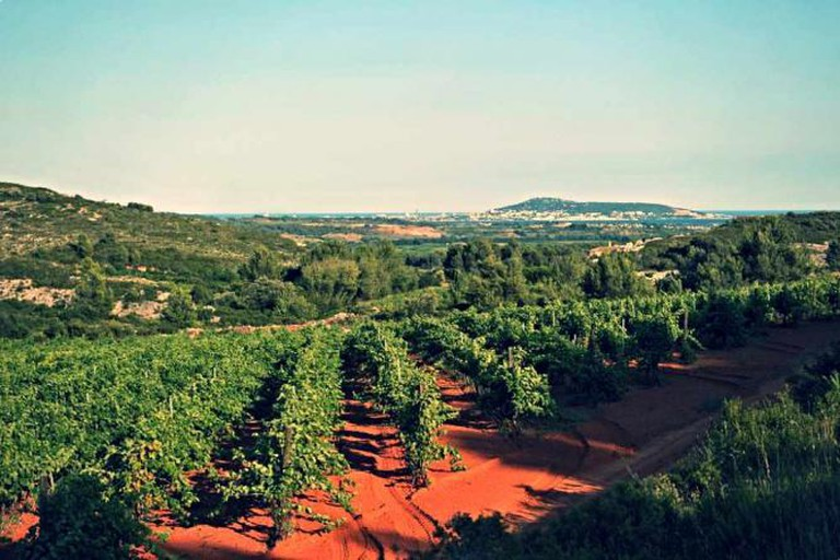 Vineyards of Languedoc-Roussillon