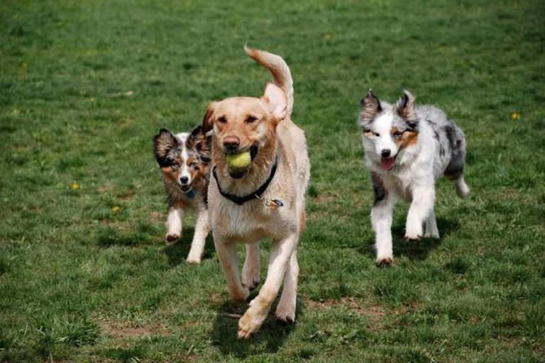 Dogs enjoying themselves