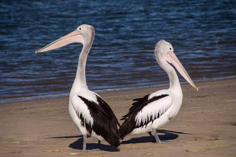 The Pelican Restaurant