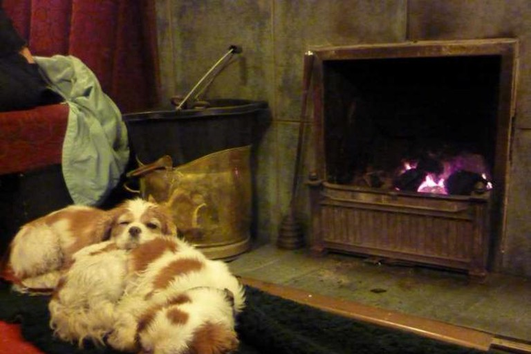 Dogs by the fire at The Golden Rule