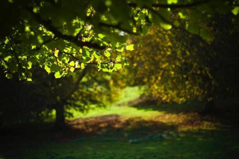 Autumn in Dyrham Park