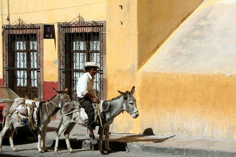 Riding donkeys in San Miguel