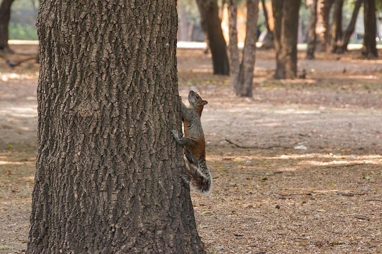 Squirrels in Bosque de Chapultepec