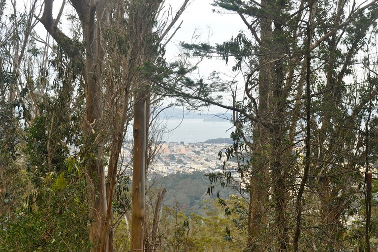 A view of the city and bay peak through trees at the top of Mt. Sutro Forest