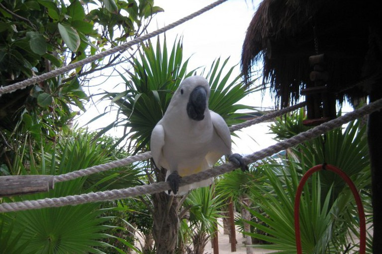 Pet Parrot at Coconut Bar and Grill