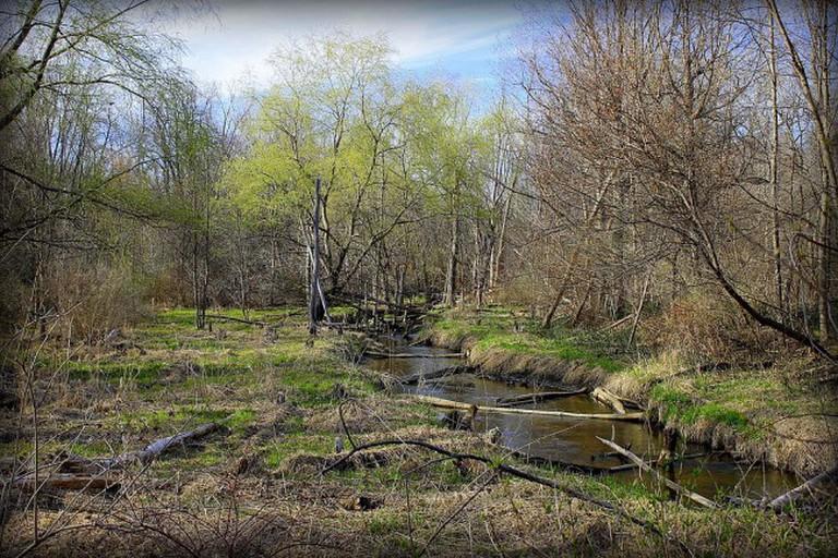 Ingersol Creek, Novi, MI