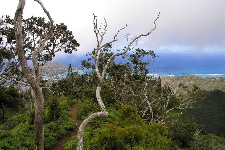 Kuli'ou'ou Ridge Trail | © Alan Levine/Flickr