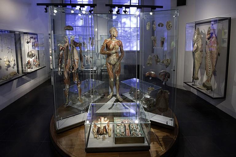 Museum Boerhaave