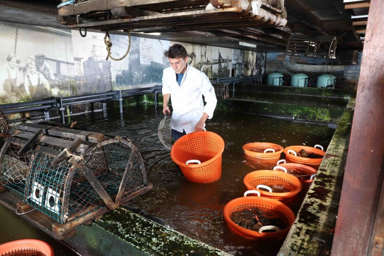 De Oesterput is a family business that has been harvesting oysters in North Sea water for well over a century