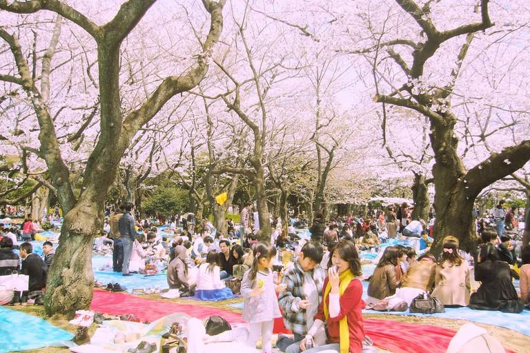 Yoyogi Park in spring