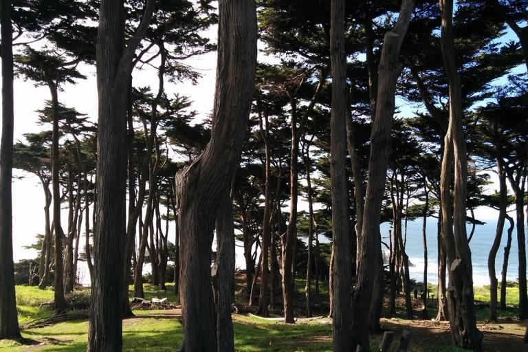 Mount Sutro Forest
