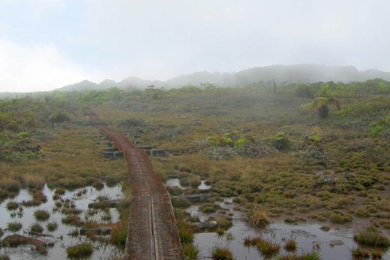 Alakai Swamp | © pfly/Flickr