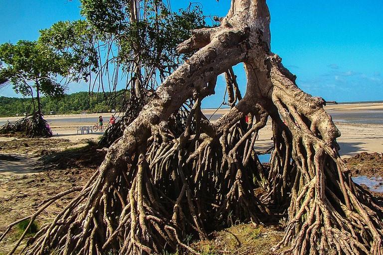ilha de Marajó in Brazil
