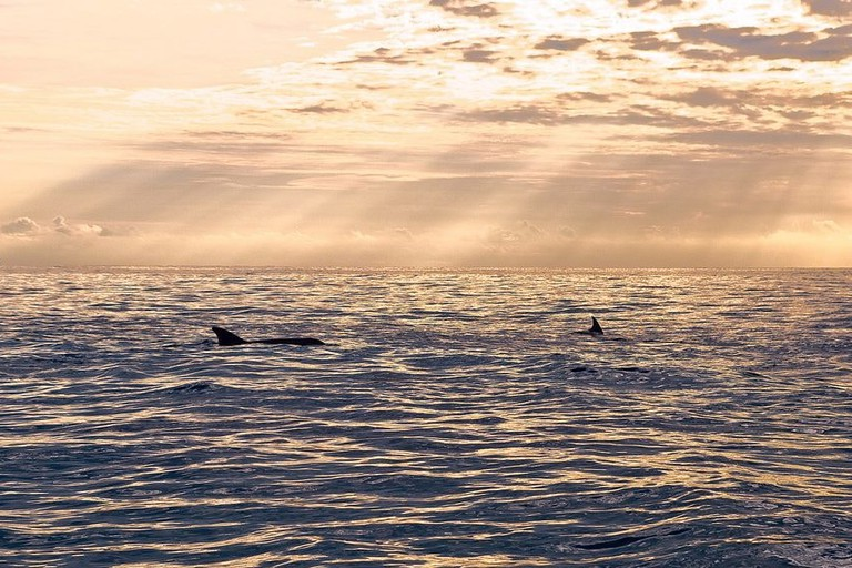 Dolphins in Kizimkazi bay