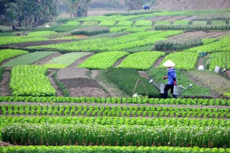 Vietnamese farmers | © Dennis Jarvis/Flickr