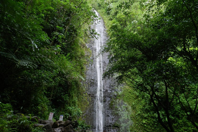 Manoa Falls | © Cardon Fry/Flickr