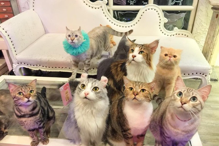 Cats at Caturday Cat Cafe