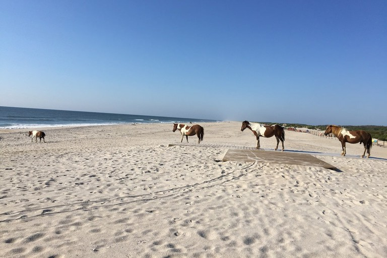 assateague-island-md-camp