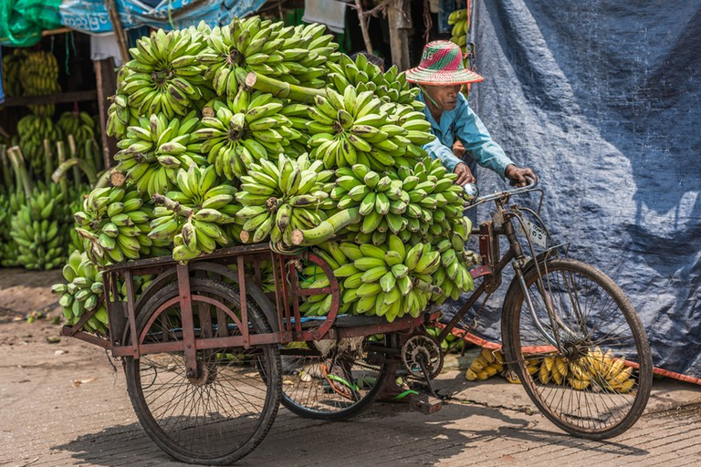 A market trader hauls bunches of bananas with his trishaw