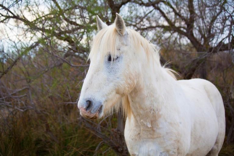 horse-1400685_1920