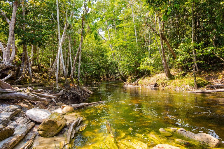 Small stream flows into the amazon forest, in Presidente Figueiredo, Amazonas, Brazil.