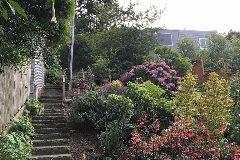 Harry Street garden and stairs