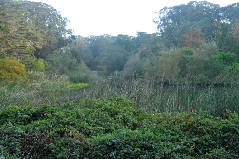 The North Lake in the Golden Gate Park