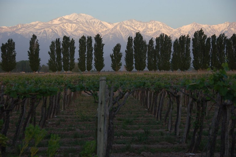 Mendoza's beautiful vineyards