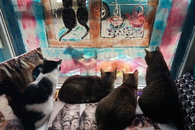 Cats in Herbaciarnia Kocie Oczy | Courtesy of Herbaciarnia Kocie Oczy
